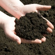 MULTI PURPOSE SOIL