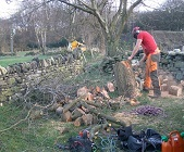 removing storm damage tree in Pontefract