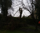 Tree shaping in Pontefract