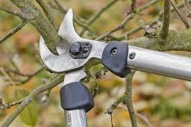 Tree Services in Yorkshire